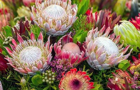 Photograph of proteas