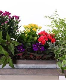Mixed Blossoming Planter