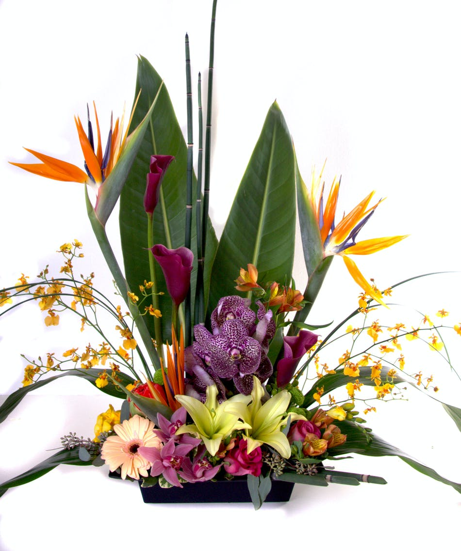 Tropical Enchantment - Kittelberger Florist Rochester & Webster | NY ...