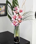 Cymbidium Sophistication