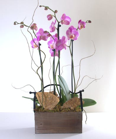 Luxury orchids in an attractive container.