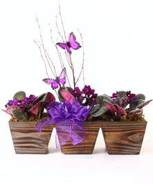 Violets in a wicker handbasket tied with purple ribbon.