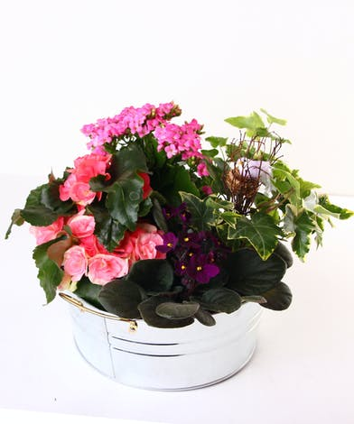 Green and blooming plants in a tin container accented with a bird in a nest.
