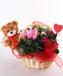 Valentine Garden