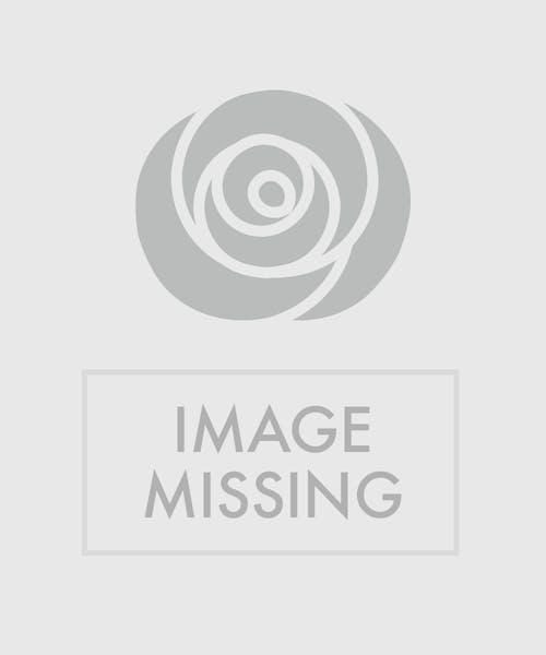 Vibrant Blooms Cube