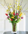 Tulips & Forsythia