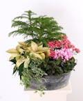 Holiday Blossoming Planter