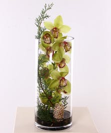 Green cymbidium orchid stem and winter greenery in a cylinder vase.