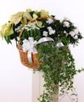 Winter White Plant Basket