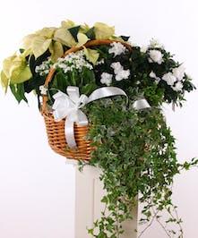 Basket planter with a white poinsettia, azalea, kalanchoe and more.