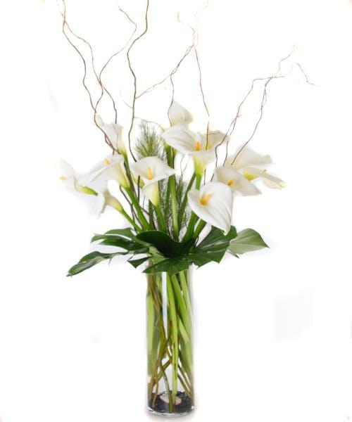 Serene Calla Lilies