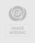 Designer's Choice Gerbera Daisy Vase