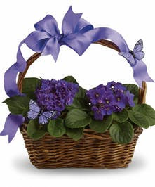 Basket of African violets tied with coordinating purple ribbon.