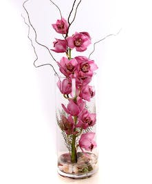 Pink cymbidium orchids in a glass cylinder vase.