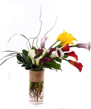 Colorful calla lilies, curly willow and fresh grass in a cylinder vase.