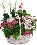 Blooming Joy Basket