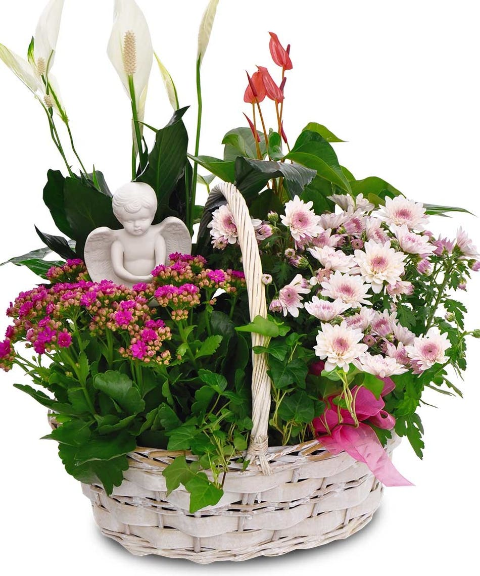 Blooming Joy Basket Angel Ny Plant Flower Delivery