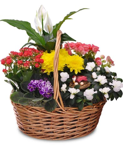 Basket of assorted green and blooming plants.