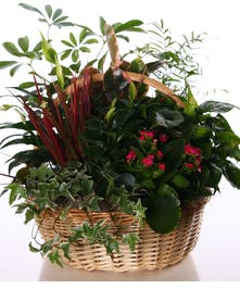 Basket filled with green and blooming plants.