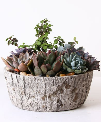 Succulent plants in a charming container.