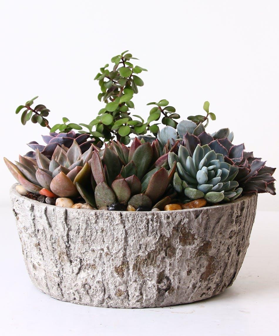 Succulent Garden Plant Kittelberger Florist Ny