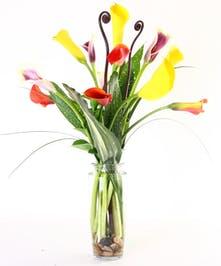 Purple and yellow calla lilies with greenery in a tall glass vase.