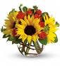 Sunny Sunflowers with Spray Roses