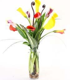 Mixed Colored Calla Lilies