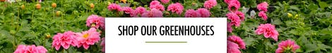 Shop Our Greenhouses